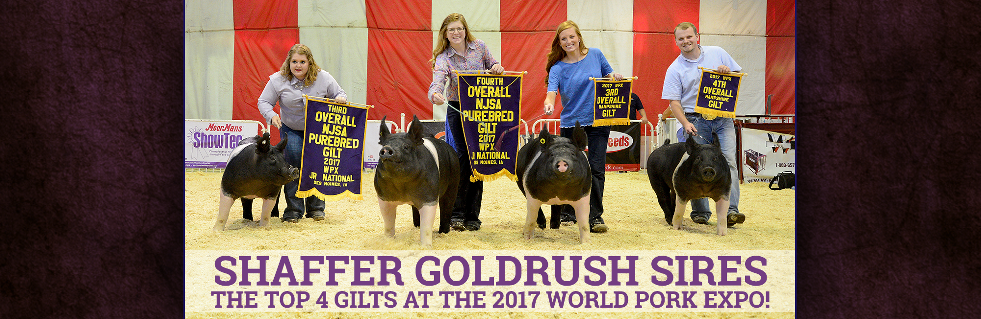 four show pig sires World Pork Expo