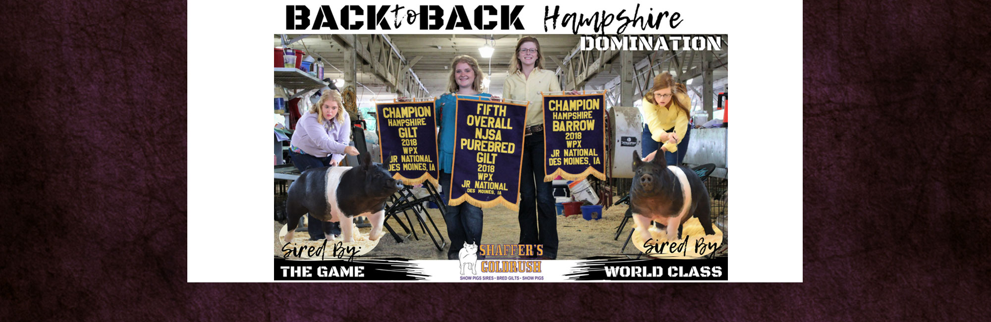 Back to Back Hapshire Domination
