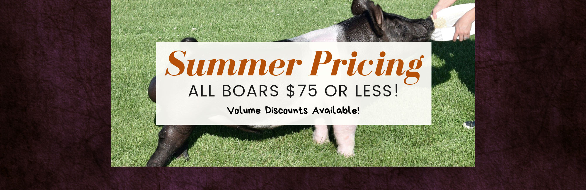 Summer Pricing