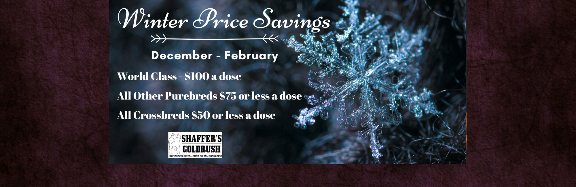Winter Price Savings
