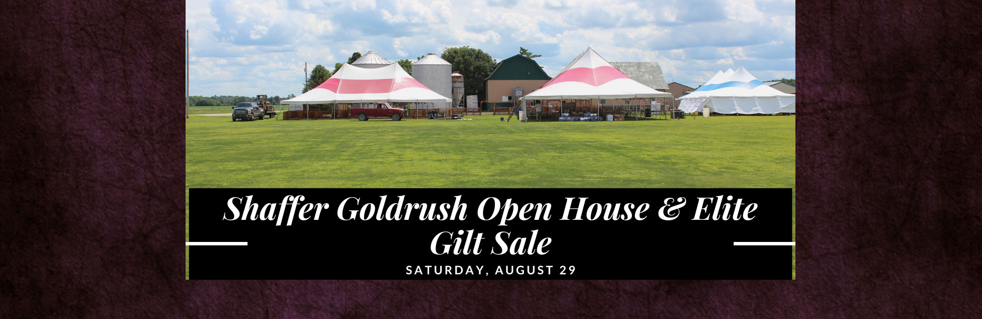 Shaffer Goldrush Open House Elite Gilt Sale